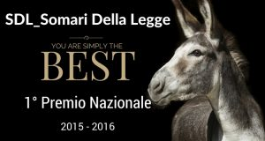 Mantova_Lite Temeraria_SDL Centrostudi