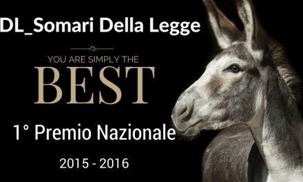 Mantova, Lite Temeraria ed è ancora di SDL Centrostudi!